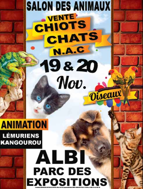 salon du chiot et du chaton animaliades parc des expositions albi le s questre samedi. Black Bedroom Furniture Sets. Home Design Ideas